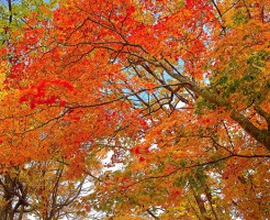 autumn-leaves_00005