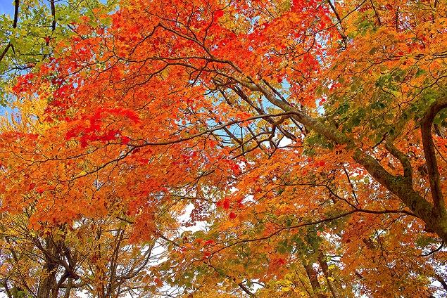 autumn-leaves_00005