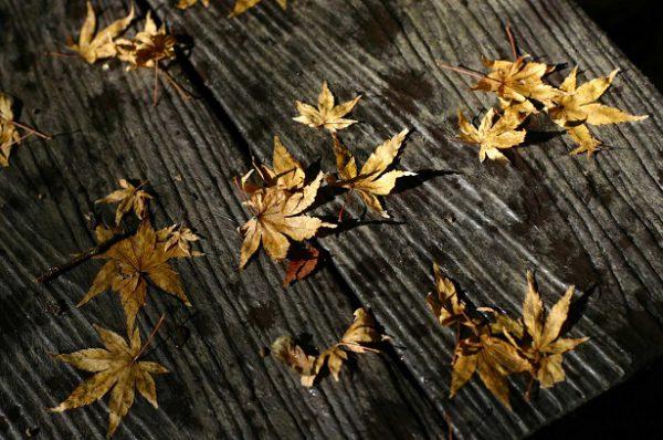 箱根紅葉イメージ